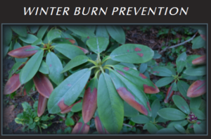 How to Protect Trees & Shrubs From Winter Damage