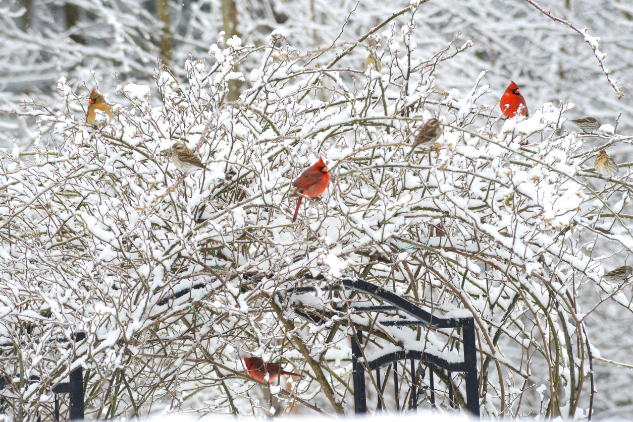 Winter Landscape and Gardening Tips