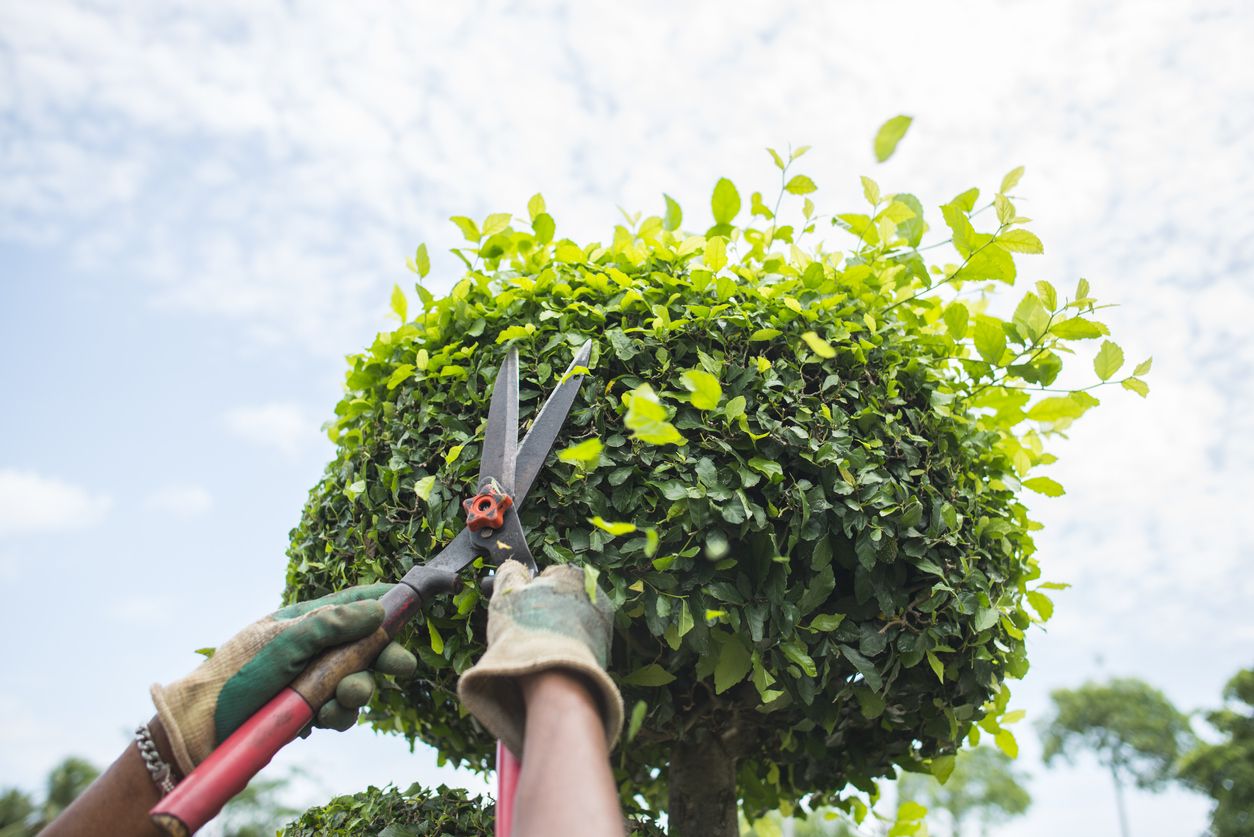 Spring Pruning Tips to Keep Your Landscaping Looking Fresh