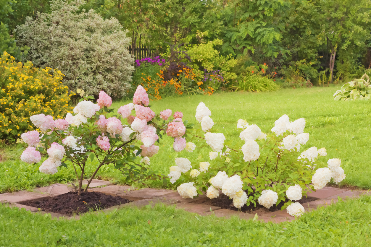 The Best Summer Blooming Shrubs to Add Color to Your Landscaping