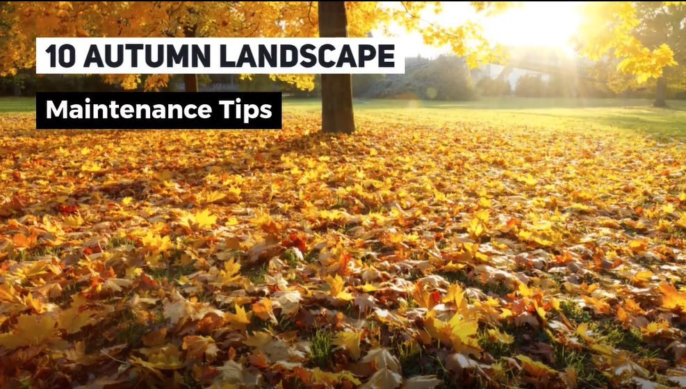 10 Autumn Landscape Maintenance Tips