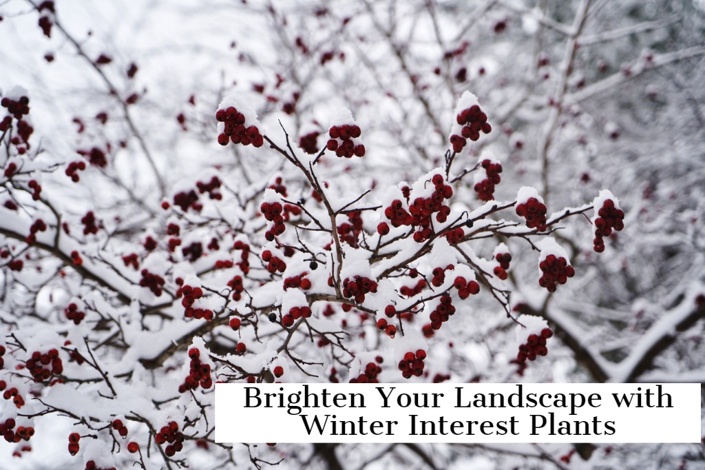 Brighten Your Landscape with Winter Interest Plants