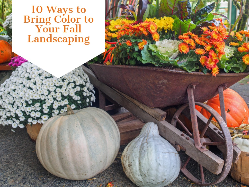 10 Ways to Bring Color to Your Fall Landscaping
